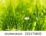 Green Grass And Daisies  Summe...