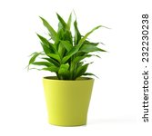 lucky bamboo isolated on white | Shutterstock . vector #232230238