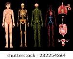 illustration of various human... | Shutterstock .eps vector #232254364