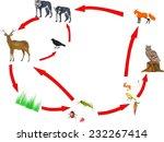 food chain between different... | Shutterstock .eps vector #232267414