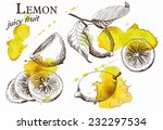 hand drawn illustrations of... | Shutterstock .eps vector #232297534