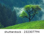 Green Tree Alone On Beautiful...