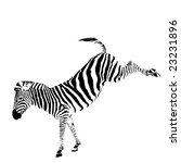 Vector Illustration Of Zebra...