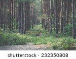 trail in the woods near sea in...   Shutterstock . vector #232350808