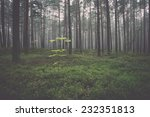 Stock photo misty morning in the woods vintage effect 232351813