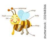 illustration of bee vocabulary... | Shutterstock .eps vector #232468366