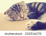Cute Cat Sleeping On The Bed...
