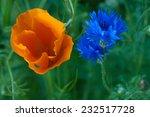 Cornflower And Californian...