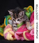 Stock photo kitten playing with wool in the studio on a black background 232577758