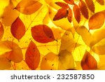 yellow and red leaves background | Shutterstock . vector #232587850