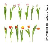 Collection Of Different Tulips...