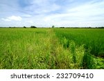 rice field in thailand | Shutterstock . vector #232709410