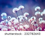 autumn meadow flowers during... | Shutterstock . vector #232782643