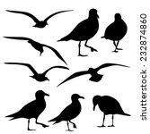 Sea Gull Silhouette  Vector