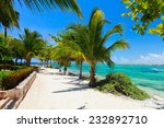 palm trees at akumal beach in...