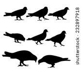 pigeons silhouette  vector  | Shutterstock .eps vector #232897918