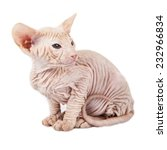 little red kitten peterbald... | Shutterstock . vector #232966834