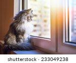 Beautiful Grey Cat Sitting On...