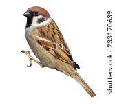 tree sparrow  passer montanus ... | Shutterstock . vector #233170639
