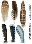 Hand Drawn Watercolor Feather...