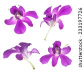 it is four purple orchids... | Shutterstock . vector #233197726