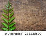Sprig Of Green Leaves On The...