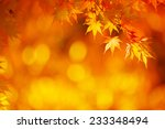 bright orange maple leafs in... | Shutterstock . vector #233348494