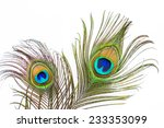 Peacock Feathers On White...