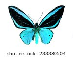 blue butterfly isolated  set... | Shutterstock . vector #233380504