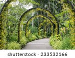 Scenic Artificial Arcs With...