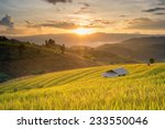 Sunset Paddy Field In Mae Jam...