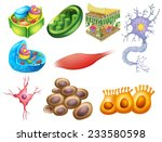different biology cells on a... | Shutterstock .eps vector #233580598