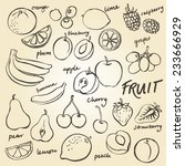 group of fresh fruit doodle... | Shutterstock .eps vector #233666929