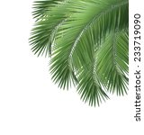 green palm leaves isolated on... | Shutterstock . vector #233719090
