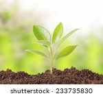 young plant new life  green... | Shutterstock . vector #233735830