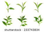 green tea leaf isolated on... | Shutterstock . vector #233743834