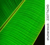 green leaf texture as background | Shutterstock . vector #233776240