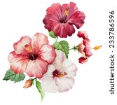 Stock vector hibiscus object painting 233786596