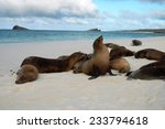Sea Lions Resting On The Beach