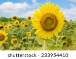 sunflowers and the blue sky | Shutterstock . vector #233954410