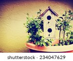 A Cute Bird House In A Pot...