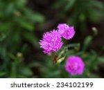 flower | Shutterstock . vector #234102199