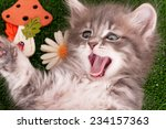 Stock photo cute gray kitten playing on artificial green grass 234157363