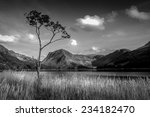 lone tree buttermere in the...