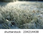 Frozen Grass With Snow And...