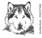 husky dog portrait  vector... | Shutterstock .eps vector #234227260