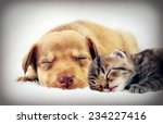 Stock photo kitten and puppy sleeping 234227416