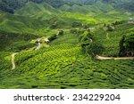 tea plantations landscape | Shutterstock . vector #234229204