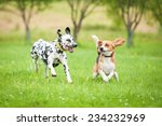 Stock photo dalmatian dog playing with beagle 234232969