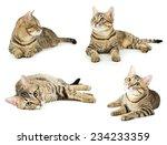 Stock photo beautiful cat isolated on white 234233359